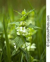 Nettle flower on the green background
