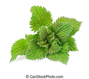 Nettle herbs close up on white