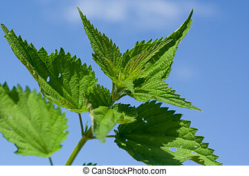 nettle on background of the sky