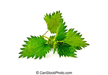 Nettle sprig - Sprig of green nettle isolated on a white...