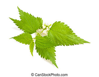 Nettle with flowers isolated on white