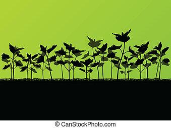 Nettles wild herbs plants detailed silhouettes illustration...
