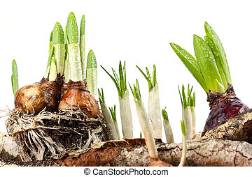 Neues Leben 2 - New sprouts breaking through the earth.