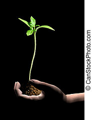 neues leben, pflanze