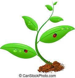 neugeborenes, pflanze