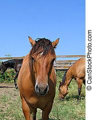 neugierig, pferd, junger