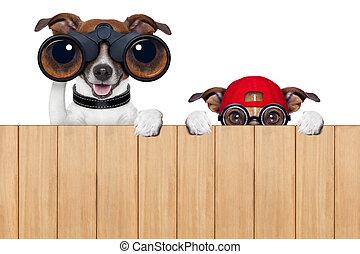neugierig, zwei, hunden