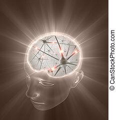 neurônios, cabeça