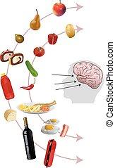 neurogastronomy - Vector Neurogastronomy Concept on White...