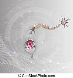 Neuron, nerve cell that is the main part of the nervous system, it passes signal to another neuron.