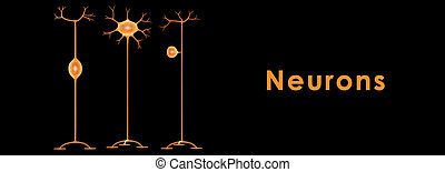 Neuron - A neuron is an electrically excitable cell that...