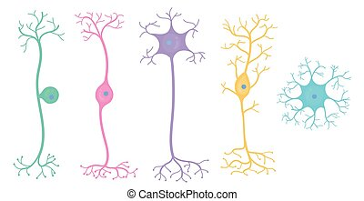 neuron, types, basis