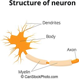 Neuron vector illustration. Structure of nervous cell