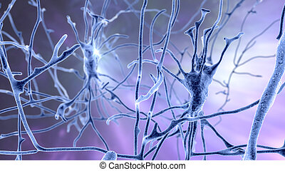 Neurons, brain cells, located in the pons of the human brain