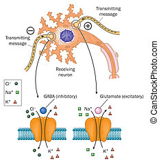 neurotransmitters, 巻き込まれた