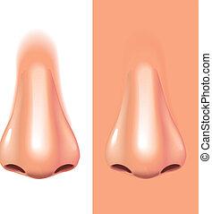 neus, vrijstaand, op wit, photo-realistic, vector, illustratie