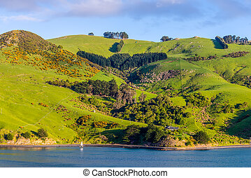 neuseeland, otago, gebiet, küsten, landschaftsbild