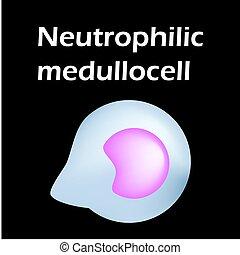 neutrophils., bakgrund., blod, infographics., neutrophils, ...