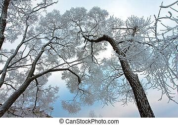 neva-coberto, ramos, de, árvore, ligado, céu, fundo