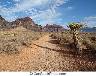 Nevada Desert Trail