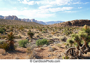 Nevada desert with mountains on background