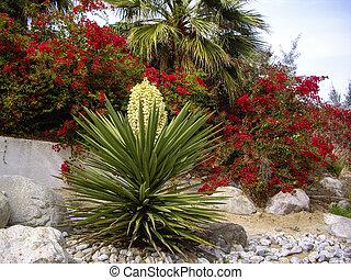 Desert flora of Nevada USA