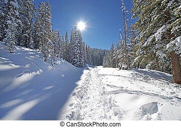 nevado, floresta, rastro