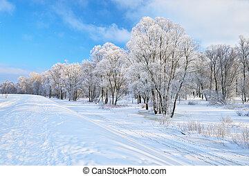 nevado, paisagem, em, a, narew, rio, valley., bonito, inverno, rastro, em, poland.
