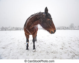nevar, mientras, apacible, nieve cubrió, campo, posición, caballo
