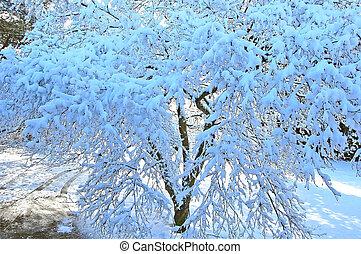 neve, árvore, carregado