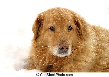 neve, cão
