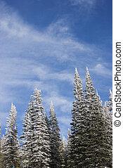 neve coberta, pinho, árvores.