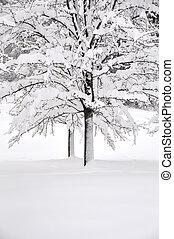 neve, e, árvores