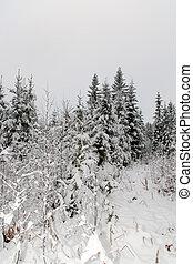 neve, floresta, Inverno