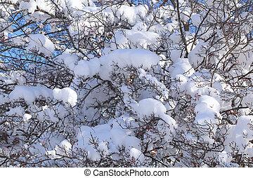 neve, ligado, a, ramos