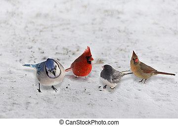 neve, pássaros, grupo, jardim, variedade