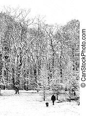 neve, passeio, com, a, cão