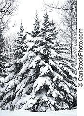 neve, su, alberi pino, in, inverno, foresta