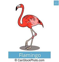 nevelési, flamingó, játék, vektor, tanul, madarak