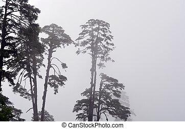 nevelig, bomen, bhutan