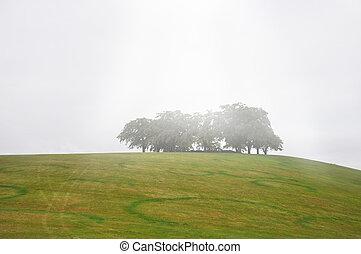 nevelig, bomen