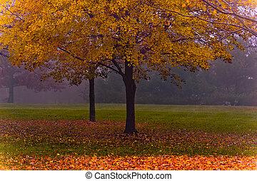 nevelig, herfst, scène, esdoorn, morgen