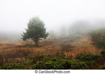 nevelig, morgen, met, bomen, in, silhouette