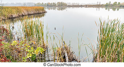 nevelig, wetlands, dag, herfst