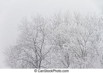 nevelig, winter bomen