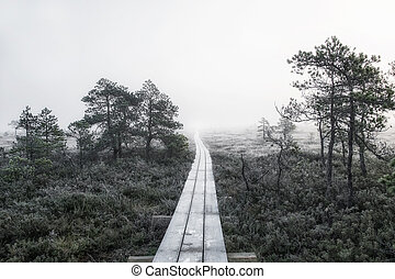 neverending road to swamp and forest