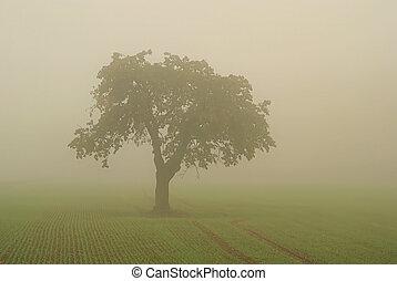 nevoeiro, árvore, 01