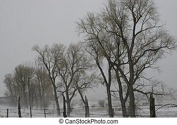 nevoeiro, árvores