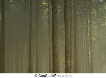 nevoeiro, 07, floresta