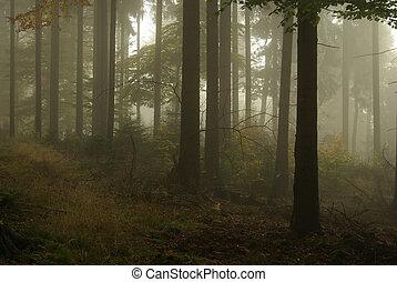 nevoeiro, 15, floresta